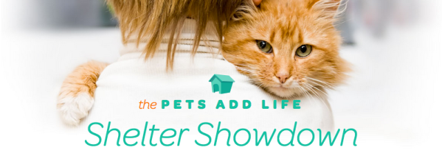 Pets Add Life Shelter Showdown